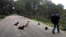 dressage canin la ciotat 13 Educateur canin la ciotat toutoucool13 Joyau stabilisation d'un chien joueur avec ses congénères