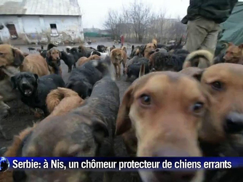 En Serbie, Sasa le chômeur aux 450 chiens