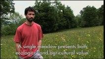Prairies fleuries -  agriculture et biodiversité (version longue sous-titrée en anglais)