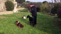dressage canin la ciotat 13 éducation canine à domicile la ciotat