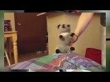 Смешные кошки  САМЫЕ СМЕШНЫЕ КОШКИ ЮТУБА Be ridiculous cat  MOST FUNNY CATS YouTube!