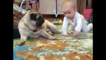Funny Videos Clips 2014 - Babies And Animals Funny Videos Compilation