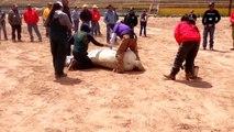 NNDA horse castration demo