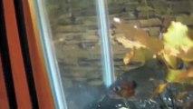 Manueli Piranha, Wolf fish, Northern Pike, Red belly piranhas, Black Rhom