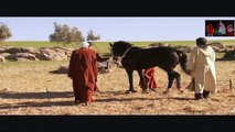 LE CHEVAL DU MAGHREB ♥♥ BARBE♥ ♥ - HISTOIRE ET TRADITION ♥ MAGHREB♥