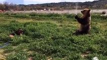 Un ours embête un chien avec un tuyau d'arrosage