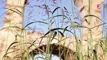 La nature mystérieuse du Pont du Gard