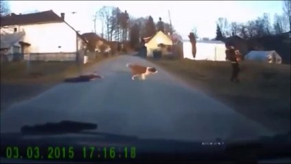 A dog walks a child