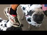Un jogger tue un chien d'un coup de pied à la tête.