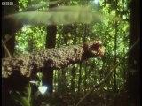 Bees building wax nests - Attenborough - Trials of Life - BBC