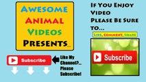 Funny Cats Compilation- Komik Kediler
