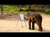 Elephants Painting Elephants - Suda... the Rembrandt of Painting Elephants