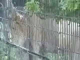 Big Cats Roar Leopard Lion Tiger Puma, Cheetah, jaguar puma cougar white lion white tiger