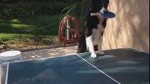 Une petite partie de ping pong avec ce chien ? Vous allez sûrement perdre on vous prévient...