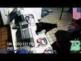 VIDEO: Un McDo est pris d'assaut par un éperdu accompagné de son chat bienveillant