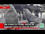 VIDEO: Une otarie viole un manchot sous les yeux ébahis d'autres phoques