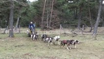 2015 Pinatelle the movie, randonnée en kart et VTT avec des chiens de traineau Norrland Husky