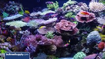 Will Red Sea Reef Energy Help Corals Grow?: BRStv Product Spotlight