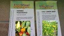Paprika und Chili vorziehen | Paprika und Tomatillo Anzucht