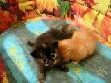 Destin Maman chat & ses chatons