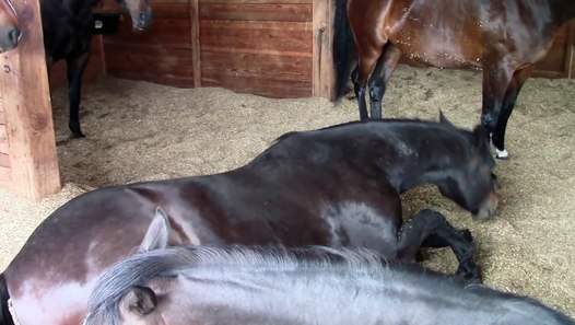 Funny Horses Farting And Snoring Vid 233 O Dailymotion