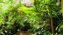 Documentaire 2013 - Au Royaume Des Plantes  Foret Tropicale