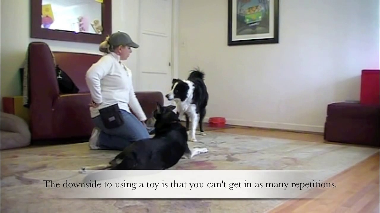 Clicker Training Basics – Dog Training