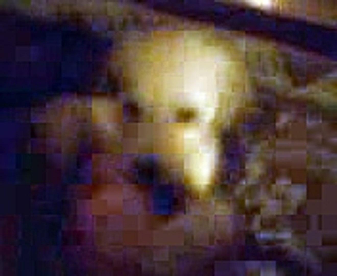 Cute Puppy Video