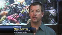 What should I do if my fish is injured by another fish?: Fish Health Care