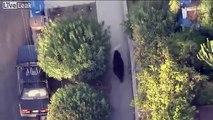 Zu Tode erschreckt- Bär läuft durch wohngebiet