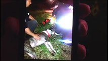 Chicago Firefighters & Paramedics Rescue & Revive 2 Dogs from House Fire
