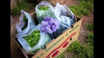Ayrshire Farm - Preserving Local Agriculture Preserving Community.mov