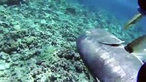 Spearfishing in Atiu, Cook Islands