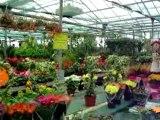 Les fleurs du printemps 006