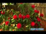 How to Prune & Care for Trees & Shrubs : How to Care for Rhododendrons & Azaleas