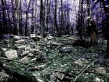 """Metal Detecting Lost NH. Colonial Rock Quarry, Relic Hunting T2 """"wicked sick"""""""