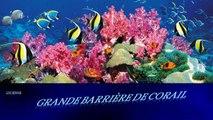 La grande barrière de corail (Australie)