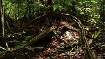 Milieu de vie des grands singes (cycle Sur la Piste des Grands Singes 2/3)