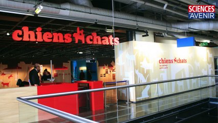 ANIMAUX. Chiens & chats, l'expo.