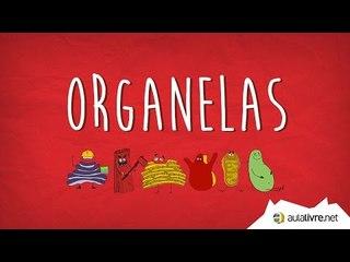 Aula Cantada #01 - Organelas