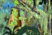 Narraciones indígenas: el Pez Caribe