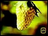 شاهد نمو  ثمرة بالتصوير السريع سبحان الله