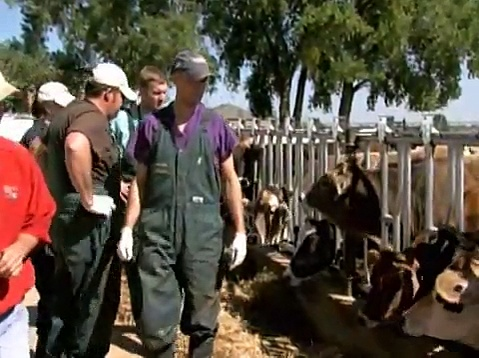 Animal Health and Welfare across Americas Cattle Ranches