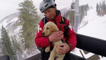 Ce bébé labrador est un Futur chien d'avalanche : trop mignon!