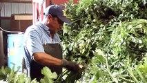 Eding Brothers Celery Farm Winner of Michigan Vegetable Council 2010 Master Farmer Award