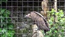 settle falconry