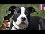 Mężczyzna zastrzelił pitt bulla w parku dla psów, bo ten chciał się pobawić z jego pupilem