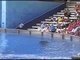Orcas- Storms in Africa- Enya