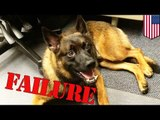 Cute police dog fired for being crappy K9 unit, unfit for police work/buddy comedy