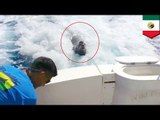 Sea lion jumps on fishing boat, gets rewarded with huge fish
